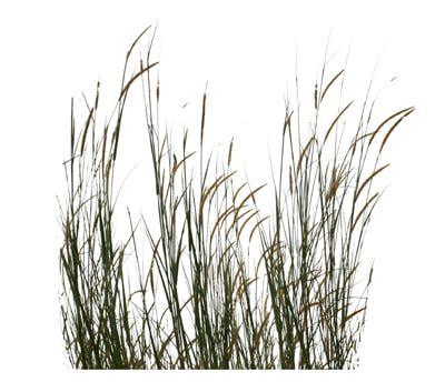 texture other wild grass wetland