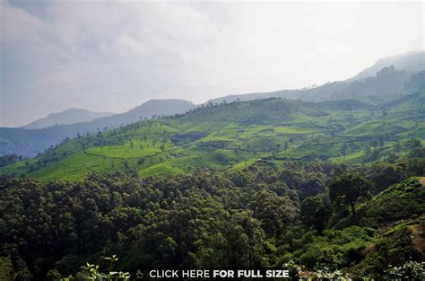 4k wallpaper kerala the evergreen tea plantations munnar kerala india hd