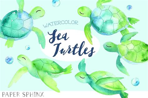 watercolor sea turtles pack illustrations creative market