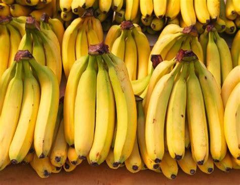 Bibit Kambing Di Jambi pisang jual bibit pohon tanaman