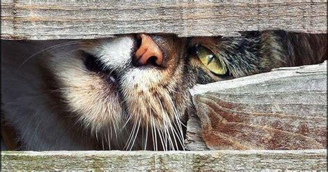 gatitos traviesos cats gats gatos gatos traviesos