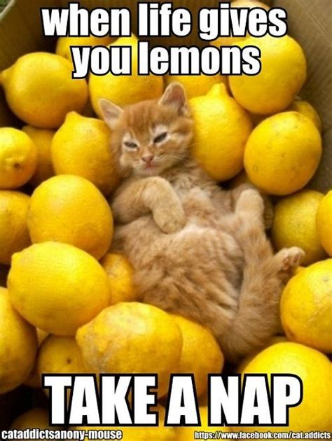 Lemon Memes - 19 best images about when life gives you lemons on