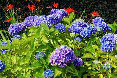 Hortensien Pflanzen Zeitpunkt 3851 by Hortensien Archive Garten Mix