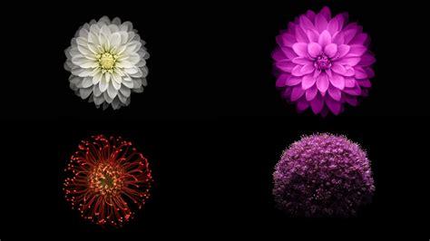 Pot 12 5 Gram Pp Bunga Putih wallpaper desktop bunga terlengkap a1 wallpaperz for you