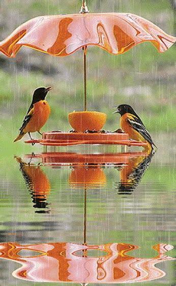 images of love birds in rain wousadiavivianecristina gifs de chuva
