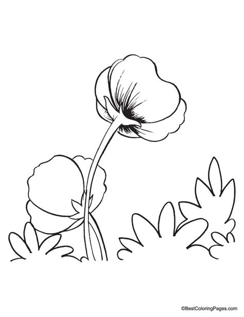free poppies to color coloring pages