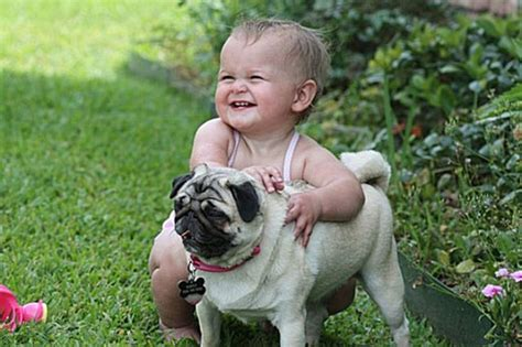 pug kid pug is my best friend pics of pugs and together pets world