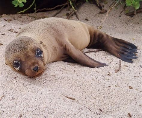 6 Amazing Animals From The Galapagos Islands by 6 Animals You Ll Find On The Galapagos Islands A