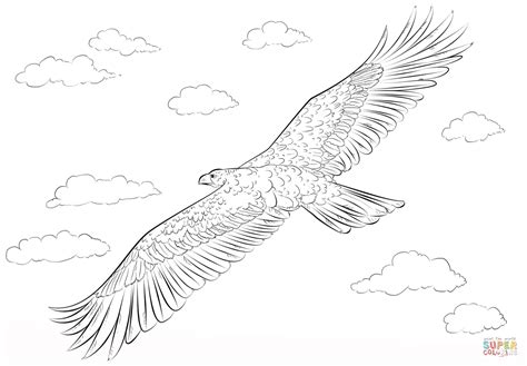 coloring page eagle flying golden eagle in flight coloring page free printable