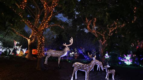christmas lights spectacular at hunter valley gardens
