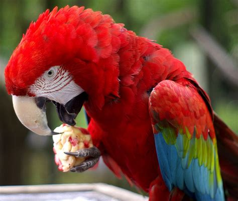 the role that carbohydrates play in the parrot diet