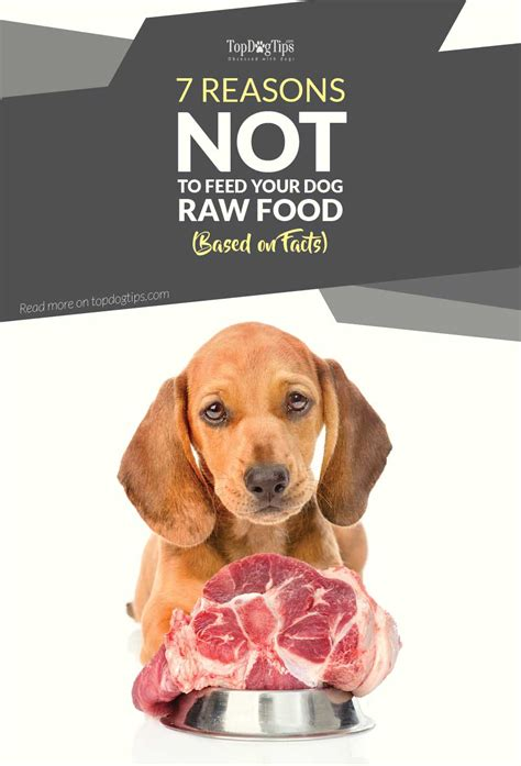 foods not to feed dogs 7 reasons not to feed your food based on facts top tips