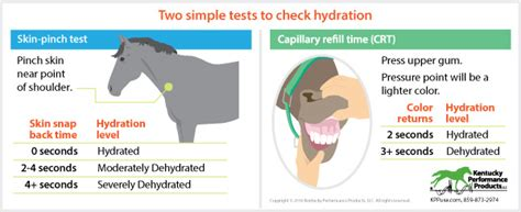 how to tell if your is dehydrated how to check if your is dehydrated kentucky performance products