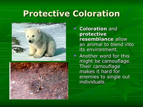 protective coloration animal adaptations i
