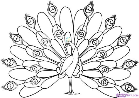 draw doodle free peacock drawing black and white cliparts co