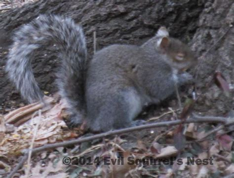 let me see you do the squirrel a squirrel s prayer evil squirrel s nest