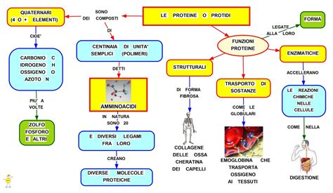 alimenti con aminoacidi mappa concettuale le proteine scuolissima