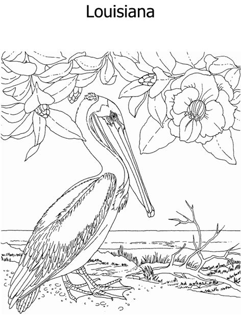 coloring page of louisiana state tree louisiana state tree coloring page coloring pages