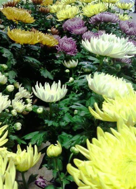come far fiorire il glicine 52 best primavera estate la gioia dei fiori e delle