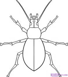 how to draw a beetle step by step bugs animals free