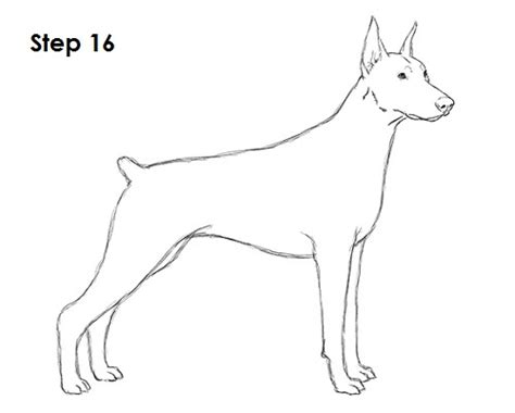 how to doberman how to draw a doberman pinscher