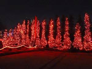 toledo zoo lights before 17 best images about toledo zoo on before