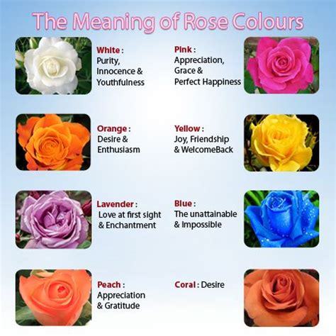 flower color meaning flower flower meaning of the colors