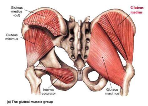 muscolo sedere 대둔근의 구조와 역할