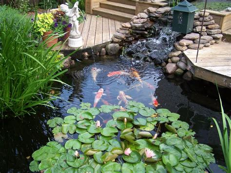 backyard fish pond raised formal backyard koi pond
