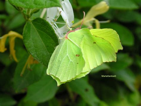 natural korean wallpaper with leaves loves butterfly treknature the leaf butterfly a borboleta folha photo