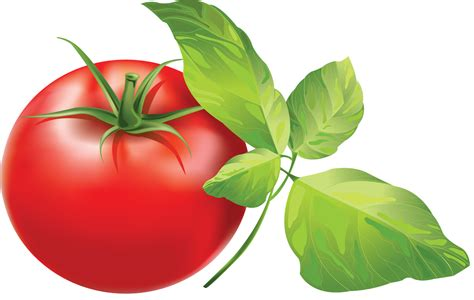 Obat Lutenyl resep jus tomat madu kulit resep huli huli chicken ayam