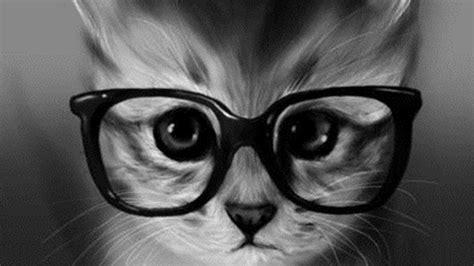 imagenes muy hipster 2smedicinaveterinaria gatitos kawaiis