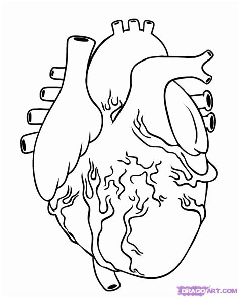 realistic heart coloring page real heart coloring pages az coloring pages