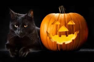 halloween black cats gallery for gt pumpkin cat wallpaper