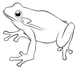 frog coloring page frog coloring page printable colouring pages
