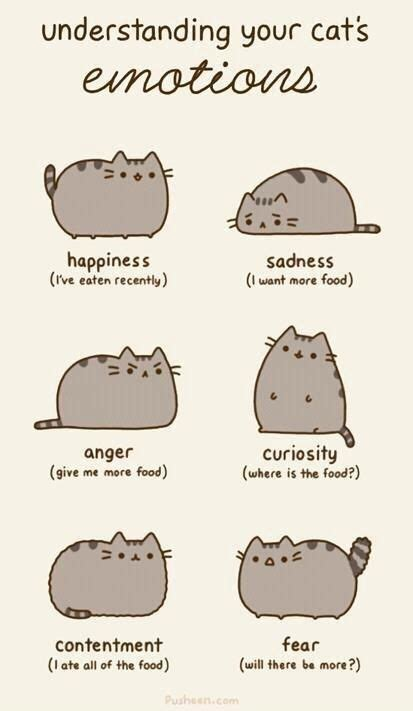 Pusheen Cat Meme - pusheen emotions kawaii pinterest cat food cat