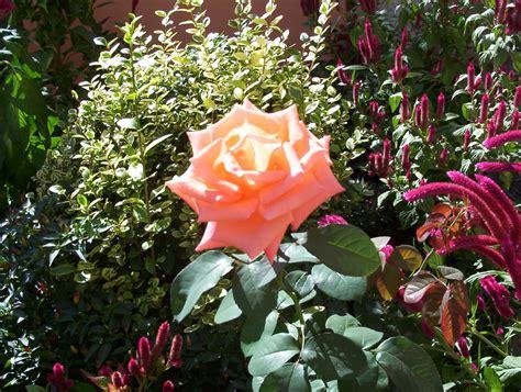 foto di fiori gratis fiori immagini gratis foto desktop scaricare