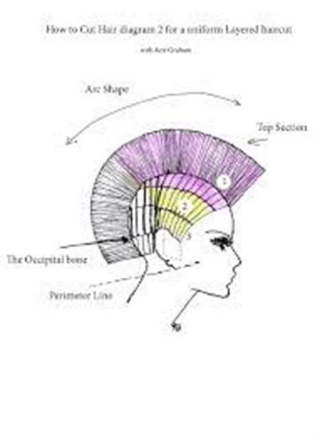 diagram of wedge haircut 27 best images about corte on pinterest shorts