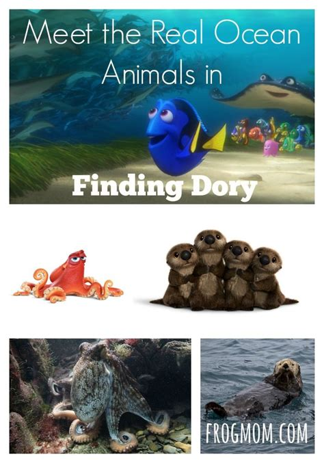 meet  real ocean animals  finding dory  fun     family  protagonists