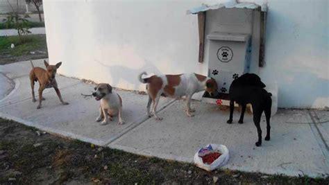 alimentadores automaticos para perros instalan dispensadores de agua y comida para perros de la