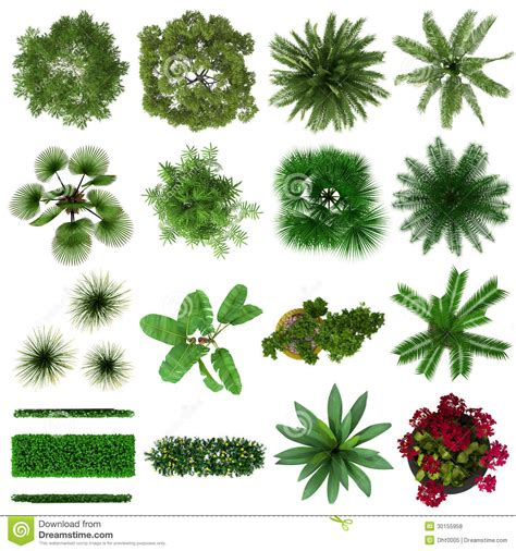 Floor Plan Drawing Symbols by Tropical Plant Top View Cut Outs Stock Illustration