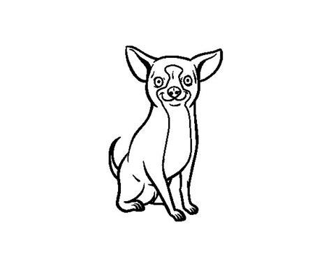 dibujos de perros para colorear dibujosnet dibujo de perro chihuahua para colorear dibujos net