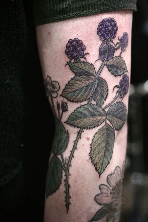 botanical illustration tattoo best 25 blackberry ideas on black
