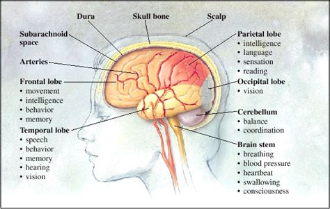 the brain sterling care in home care greenwich ct