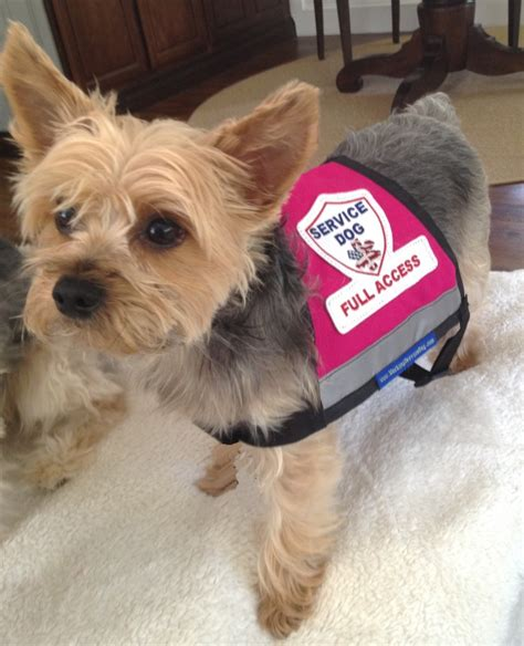 small service dogs service gear premium xx small and x small service vest