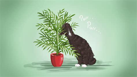 best low maintenance dogs the best low maintenance pet friendly houseplants lifehacker australia