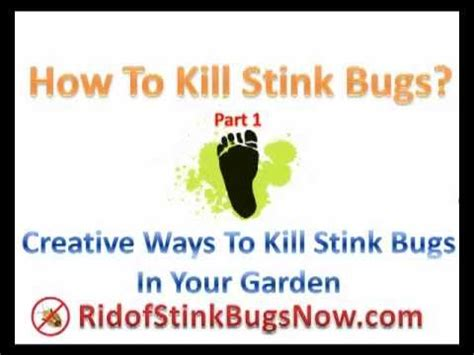 how to get rid of stink bugs in my house how to kill stink bugs part 1 rid of stink bugs in your garden naturally youtube