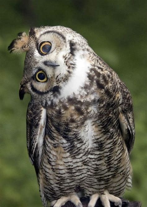 people are just finding out what owls look like without