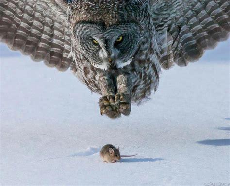 Prey Of The Predator predator vs prey image