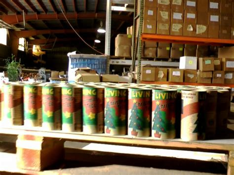 grow your christmas tree company in ca us company provides kits to grow your own tree abc news